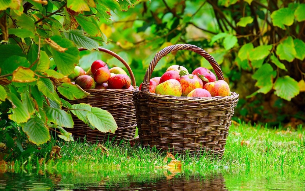 6349_Autumn-harvest-baskets-full-of-apples