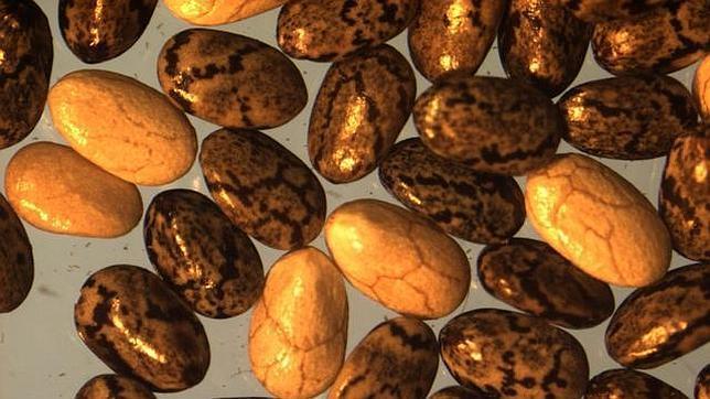beneficios-semillas-chia--644x362